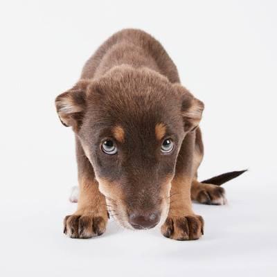 paura cane pauroso