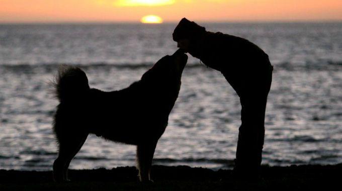 Empatia cani