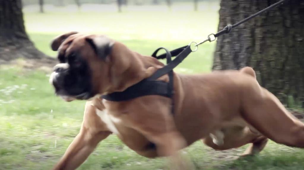 aggressività fra cani