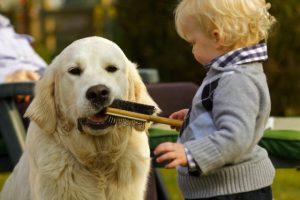 Cane e bambino che cerca di spazzolarlo