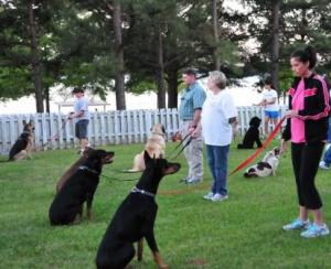 cani - addestramento attenzione