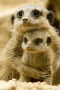 un animale sociale riceve conforto dalla madre