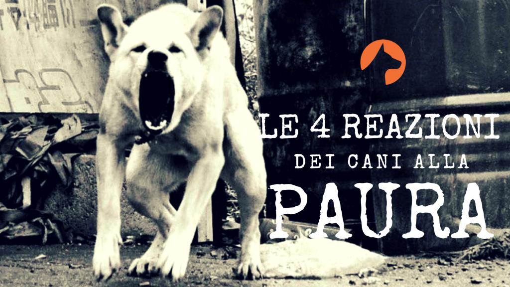 le 4 reazioni dei cani alla paura