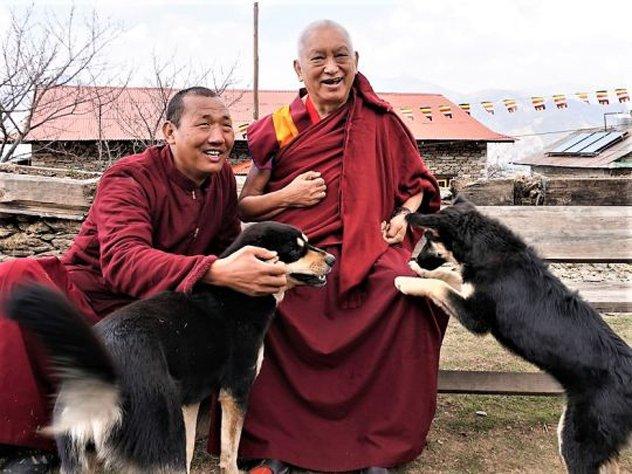 Lama Zopa Rinoche e i cani