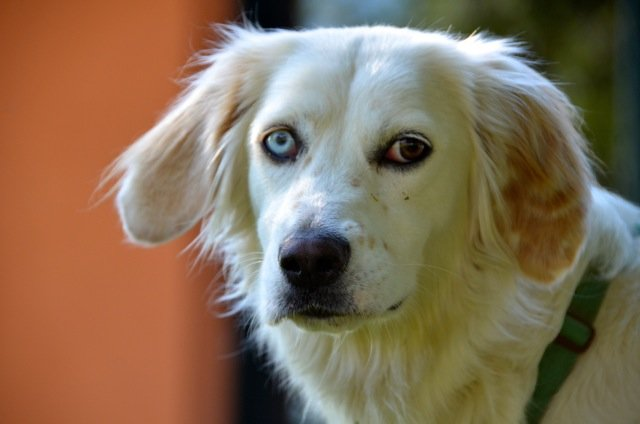 Cinofficina: Centro Riparazione Cani