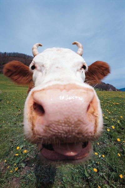 Zooantropologia, cognitivismo e realizzazione del vivente