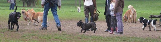 È corretto far avvicinare i cani al guinzaglio?