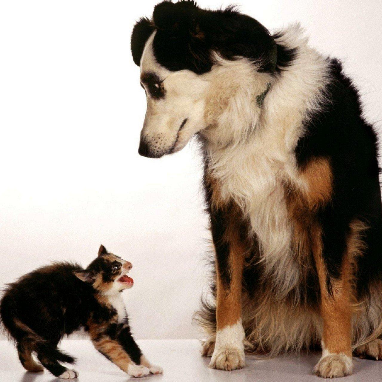 cane gatto aggressività