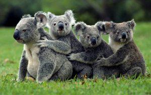 19-wildlife-photography