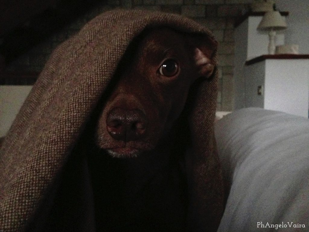 Cane sul divano - Jean Pierre