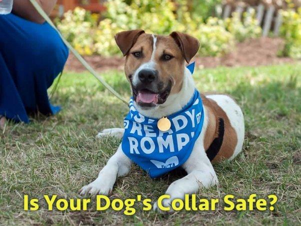 Cane con collare - è sicuro?