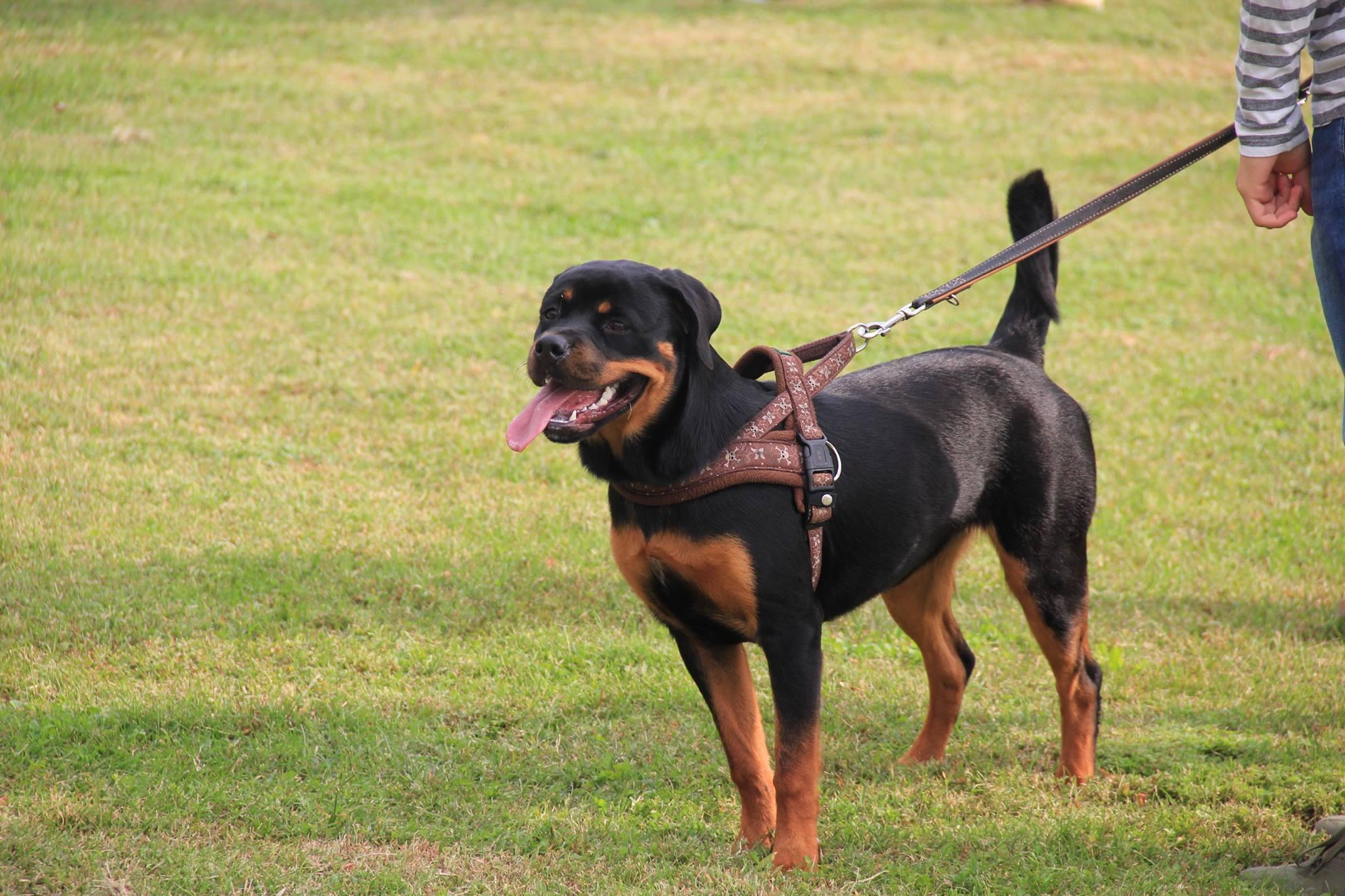 Cosa Cè Dietro Luso Delle Pettorine Per Cani Angelo Vaira