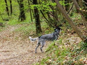Livello ambiente - apprendimento cane