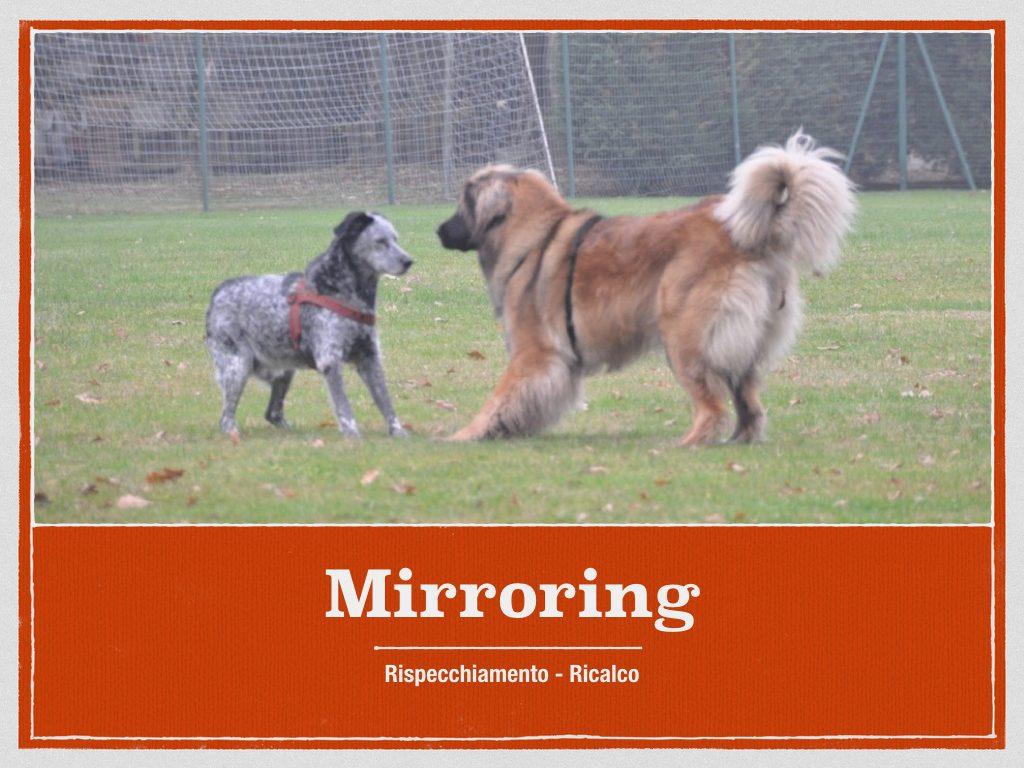 due cani in ricalco mirroring rispecchiamento