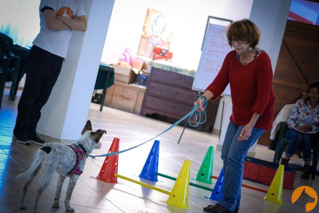 un educatore cinofilo ThinkDog segue una signora e il suo cane