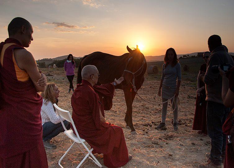 Lama Zopa Rinpoche e i cavalli