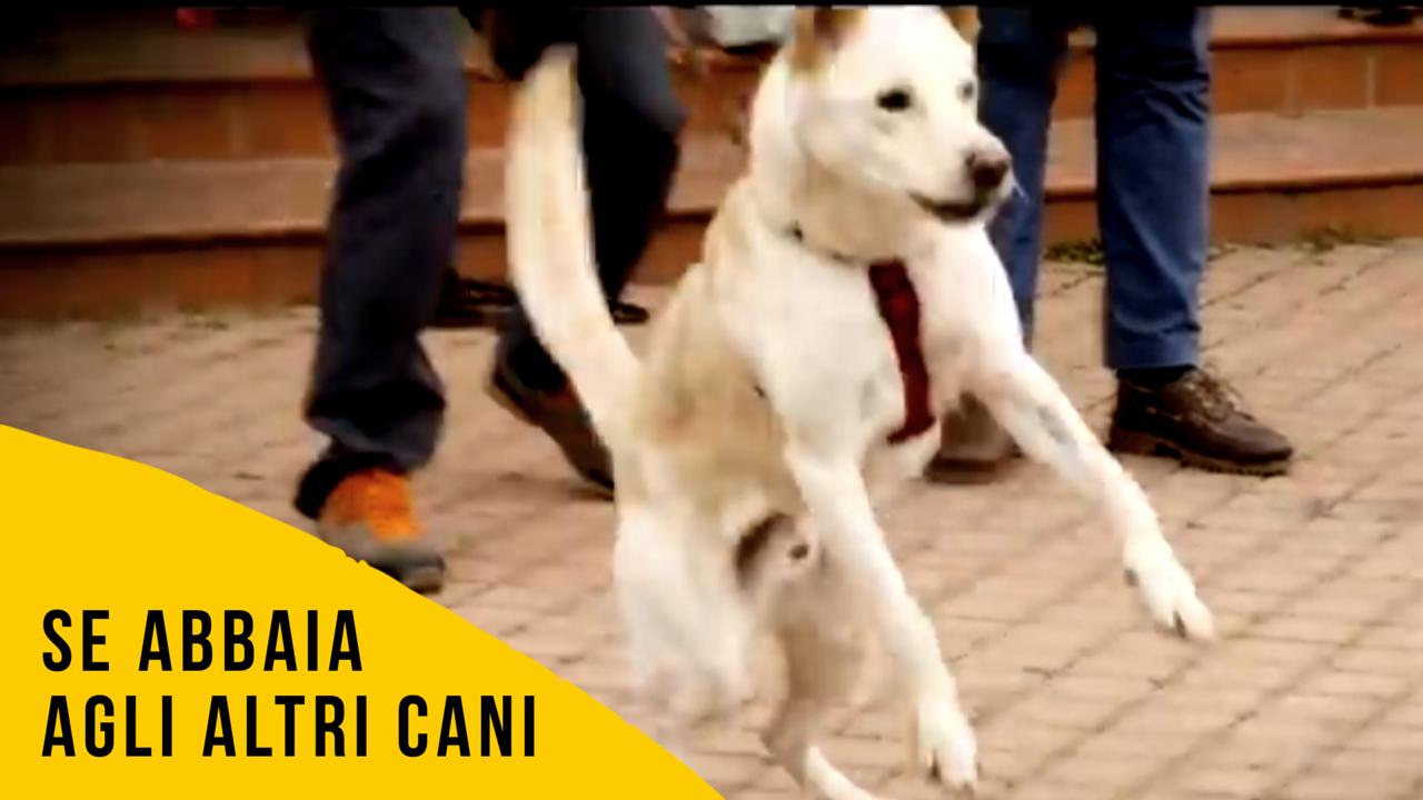 Cosa fare abbaia agli altri cani